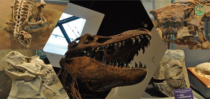 恐竜センター館内